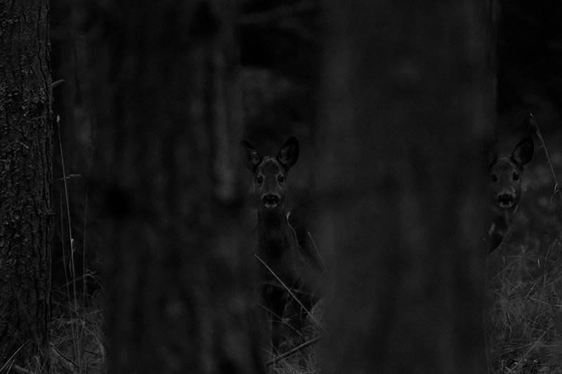 Row deer