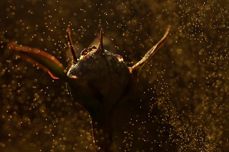 Ant on pion bud
